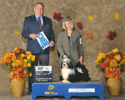 Larrgo - Grand Champion Havanese