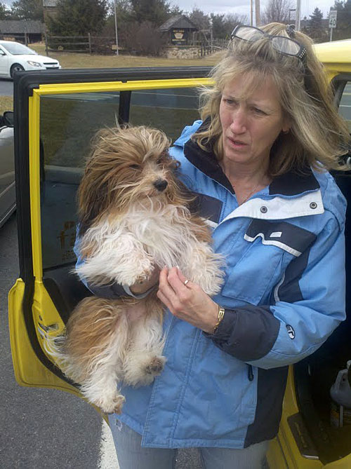 Lokkei de Grace begins path to Champion under handling by Ruthellen Viall of Viva Havanese