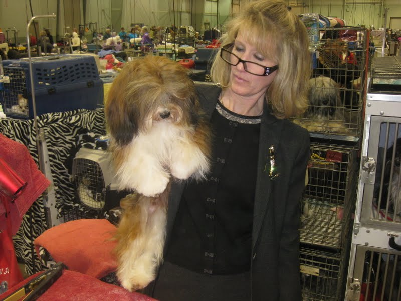 Our Havanese Lokkei wins his first show at York Kennel Club Dog show in York, PA
