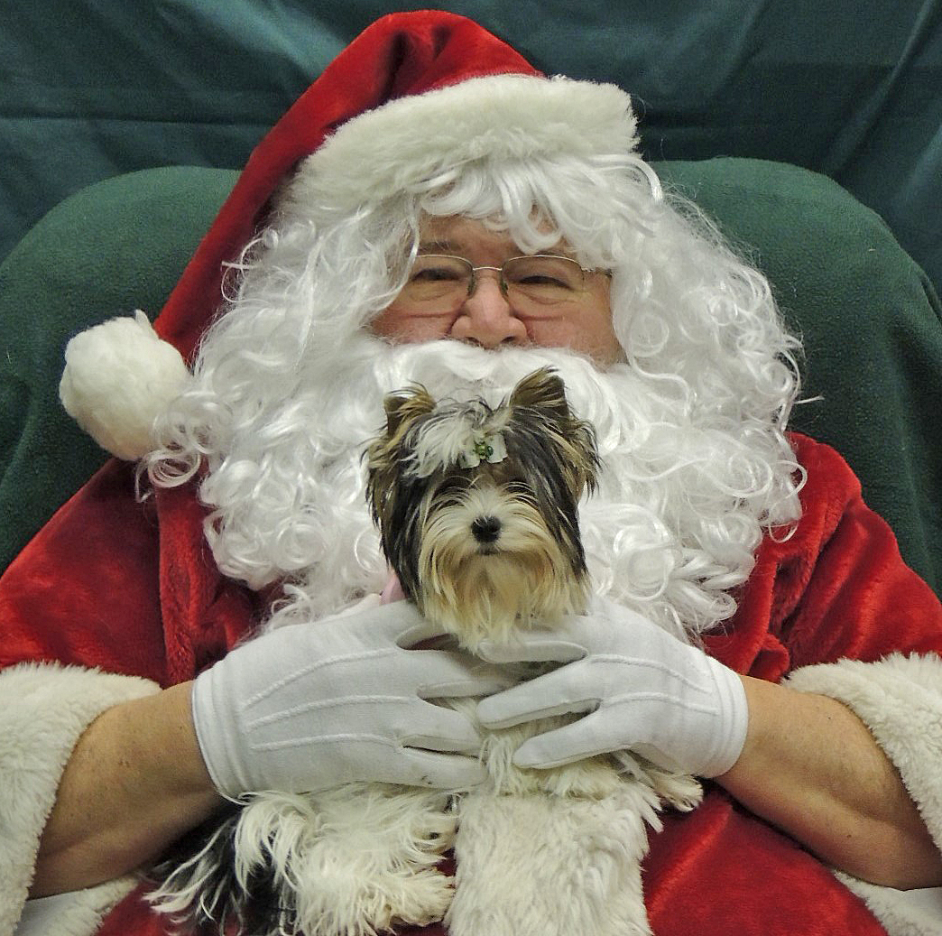 Santa with Ellie (Biewer Terrier) of Havs de Grace