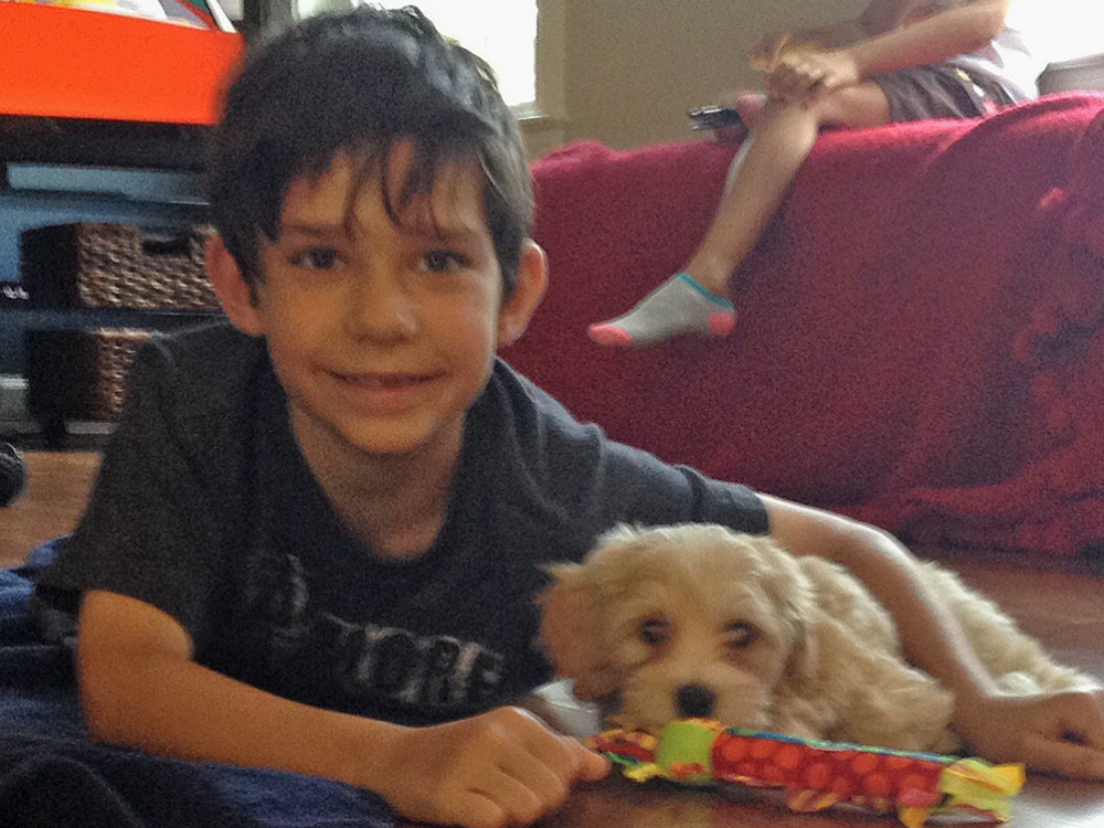 Havanese puppy Finegan enjoys games with his new best buddy!
