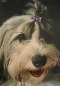 Havanese Mom - Liberty