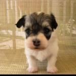 puppy 11