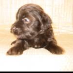 puppy 13