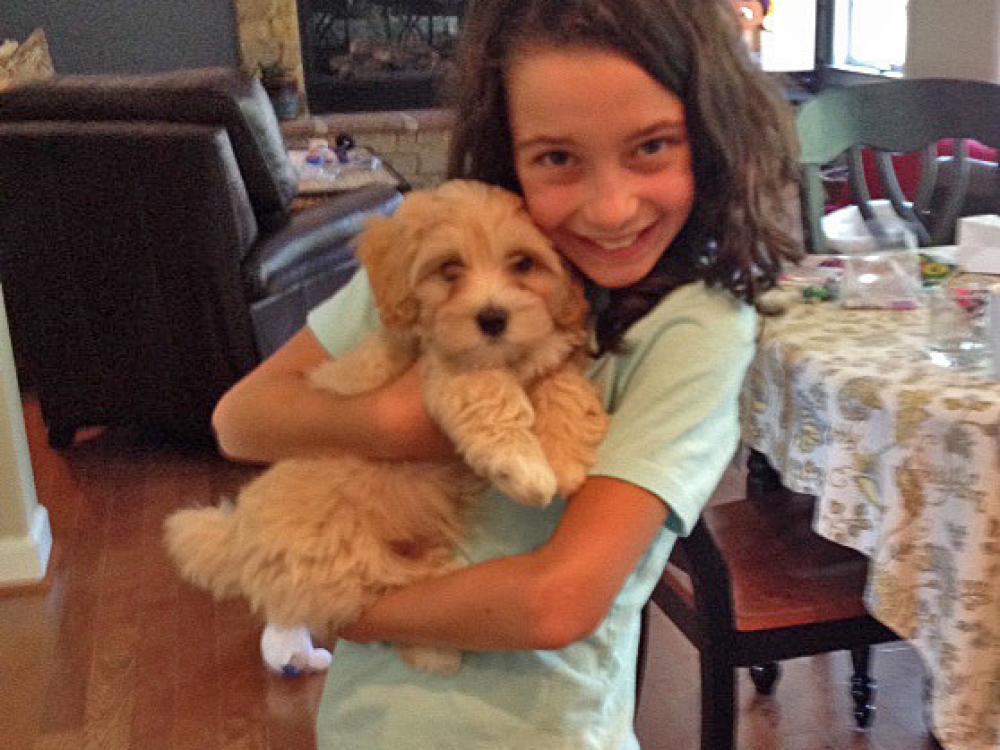 Havanese puppy Finegan meets a big warm hug!