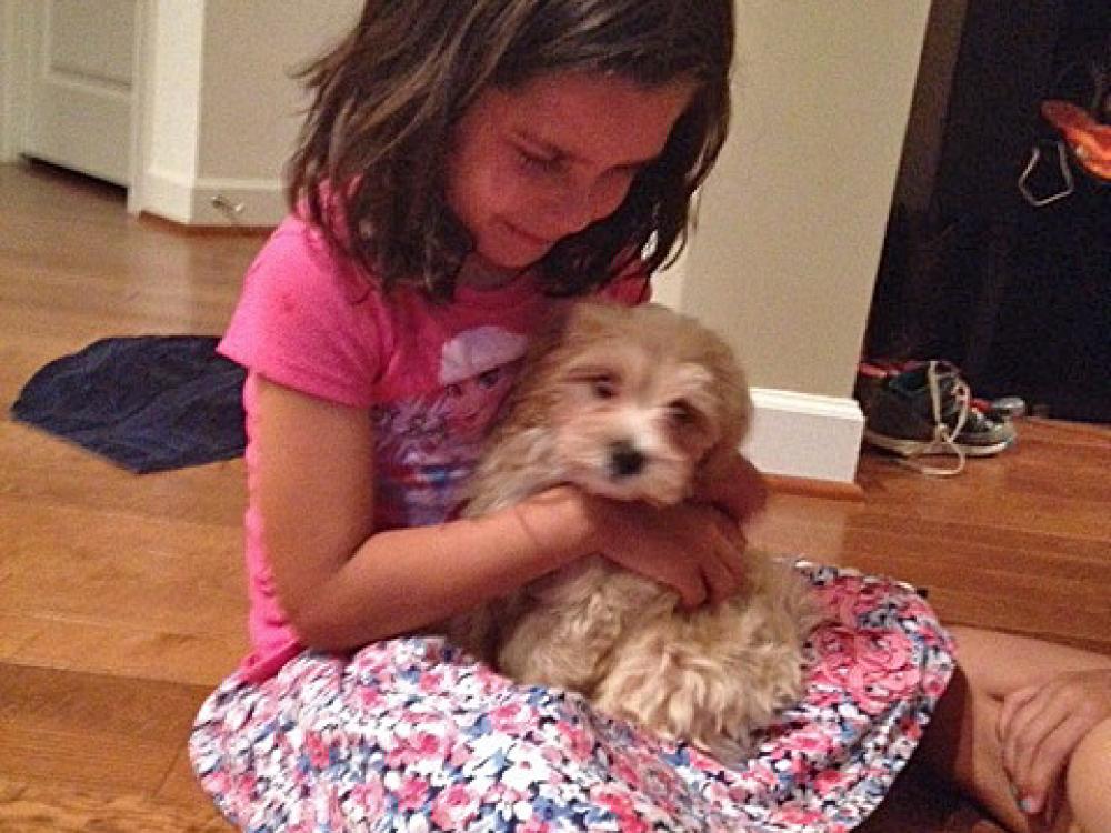 She's Havanese puppy Finegan's best cuddler!